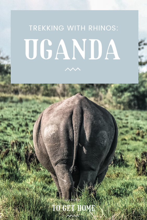 Kampala weekend getaways: Visiting Ziwa Rhino Sanctuary to go on a safari trek to see wild rhinos - the only ones that exist in Uganda today! Here's how to do it, how much it costs, and where to stay!