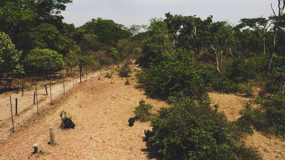 Chimfunshi Chimpanzee Sanctuary overview