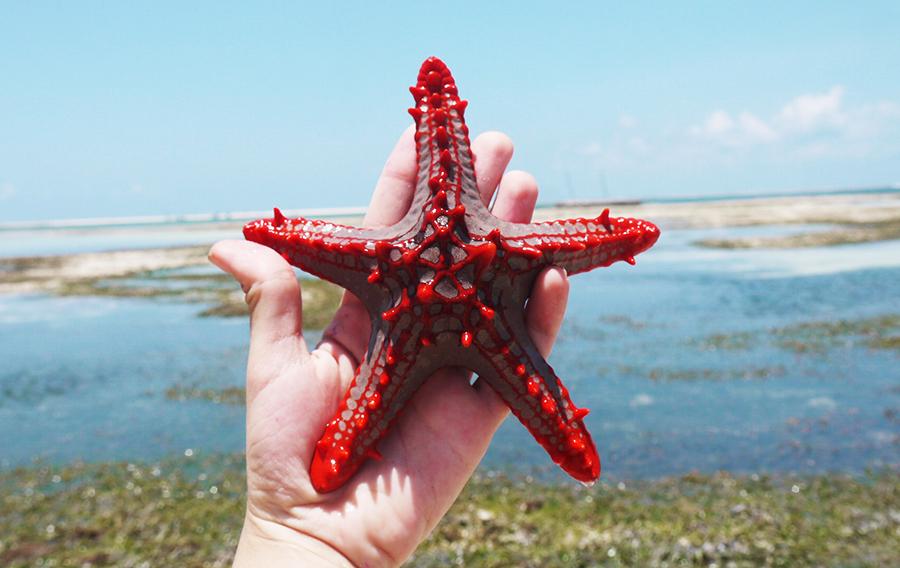 Things to Do in Diani Beach - Diani Beach Itinerary - Diani Beach Travel Guide - Kenya itinerary - Travel Kenya - Africa Travel - Mombasa - Diani Beach Day Trips