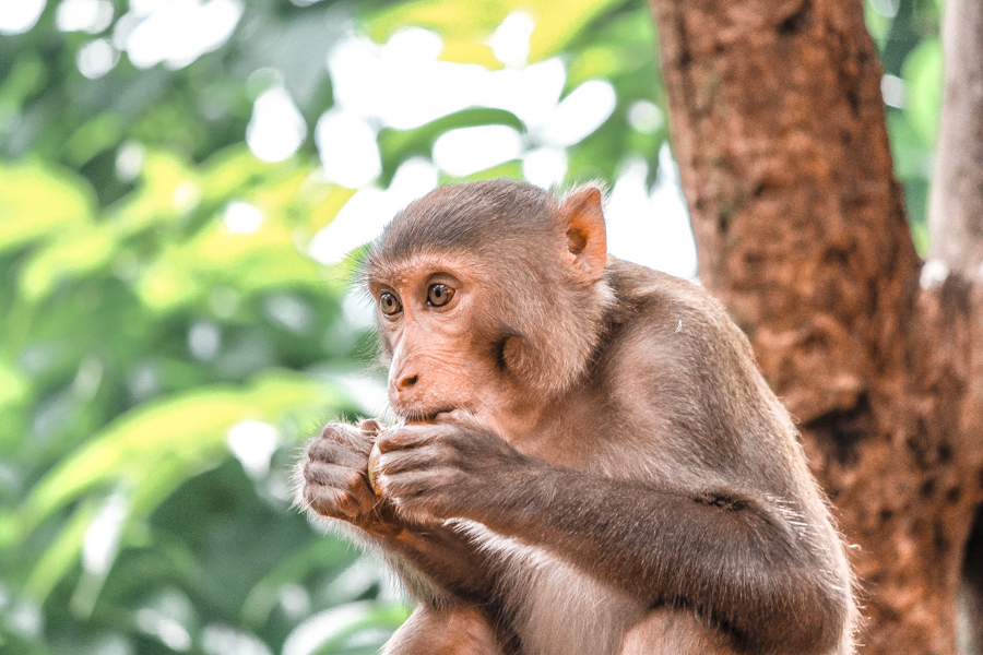 Fun things to do in Moshi, Tanzania: Walk with rescued monkeys at an ethical sanctuary near town #Moshi