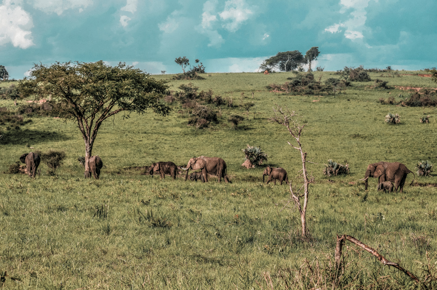Uganda itinerary: Murchison National Park