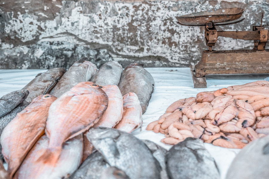 A stroll through the fish market is a can't-miss thing to do in Essaouira, Morocco