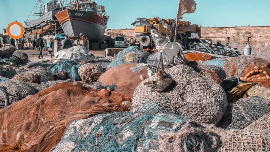 Visiting the port is one of the best things to do in Essaouira, where you'll stumble across vessels, fishermen, and cats!