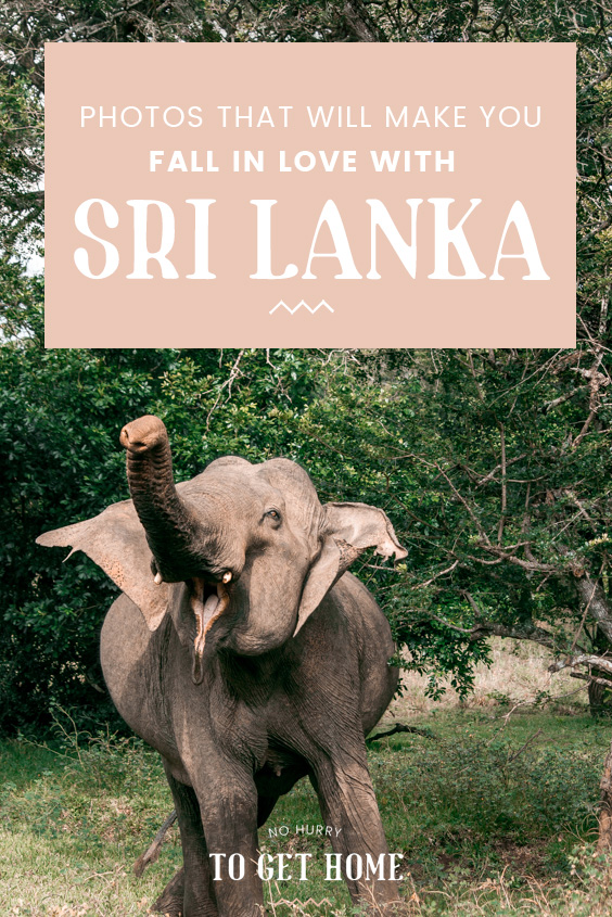 Dreaming of your next travel getaway? Here are a few photographs to inspire you to visit Sri Lanka on your next holiday!