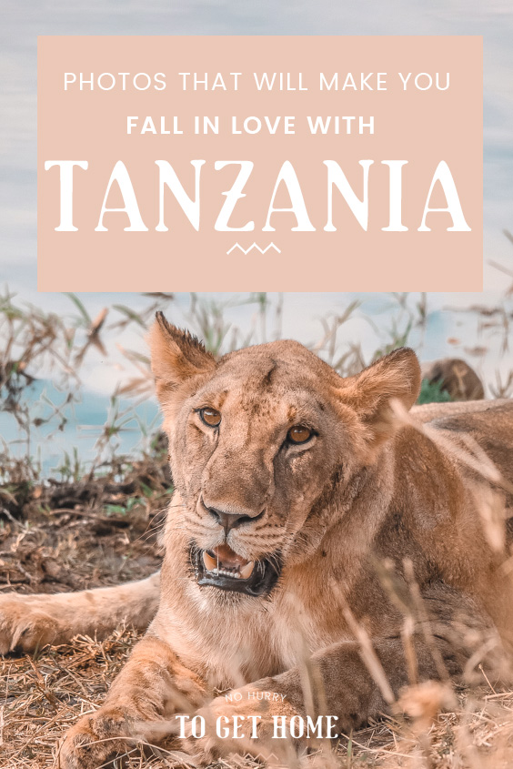 Wondering what destination to go for your next vacation? Here is a bit of visual inspiration to inspire you to visit Tanzania, a country in Africa that truly has it all!