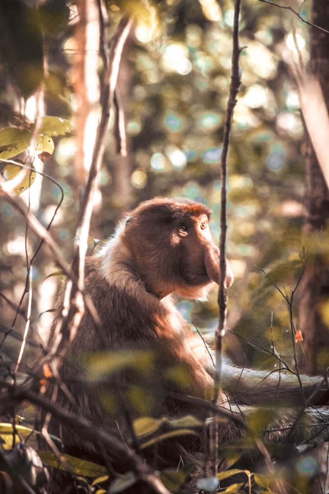 Borneo wildlife-5922