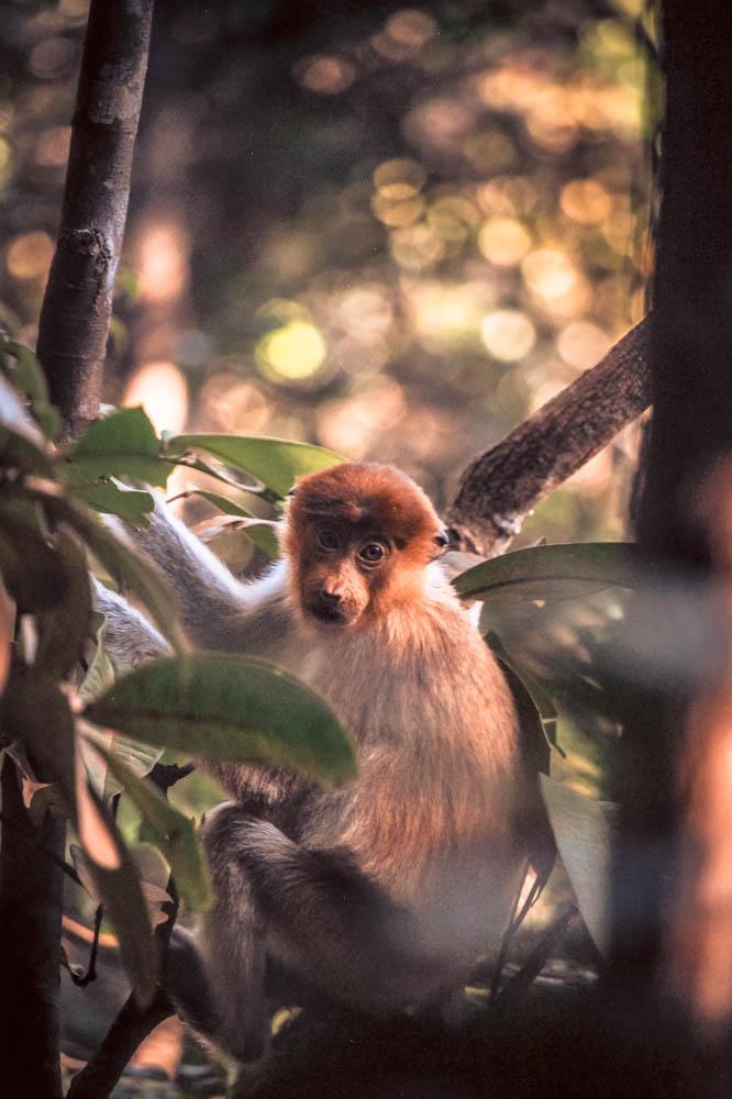 Borneo wildlife-5939