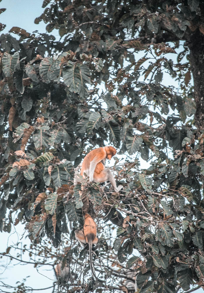 Borneo wildlife-6616