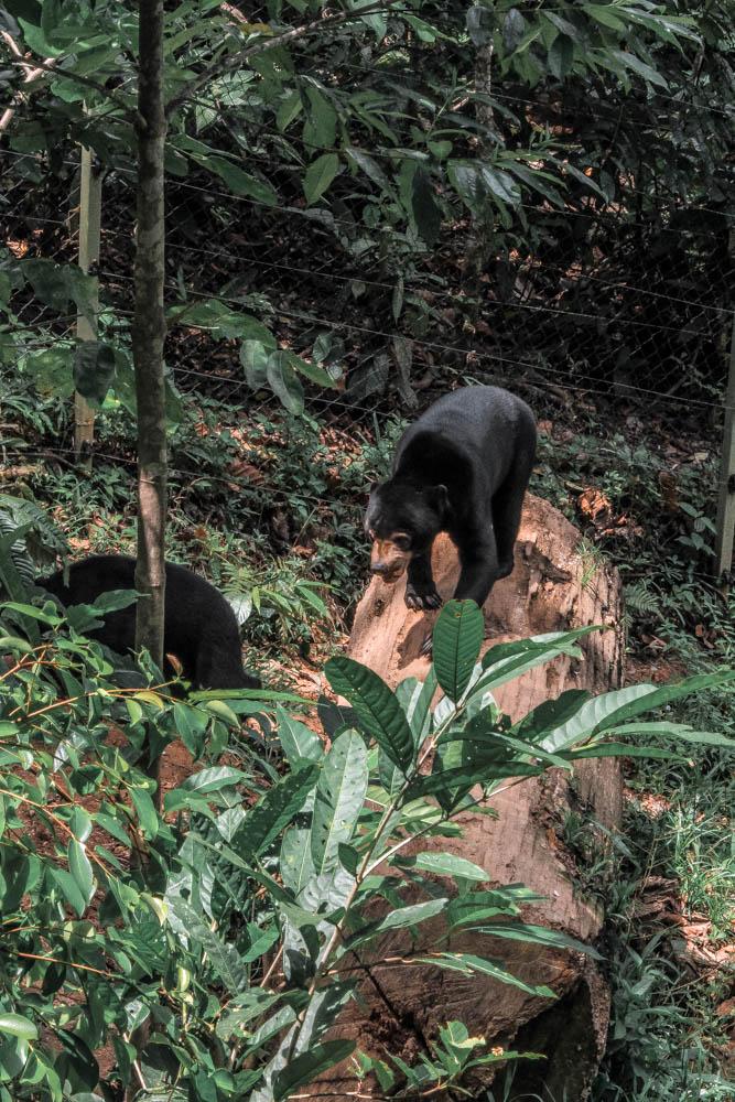 Borneo wildlife-6913