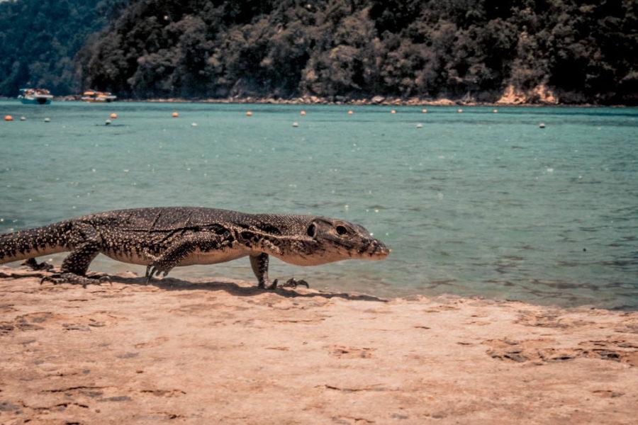 Tunku Abdul Rahman Marine Park is full of nature and wildlife!