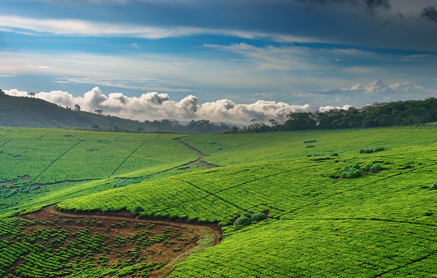 Rwanda is a classic example of how developed some countries in Africa are! In this post, I share five common myths about Africa and why they're wrong.
