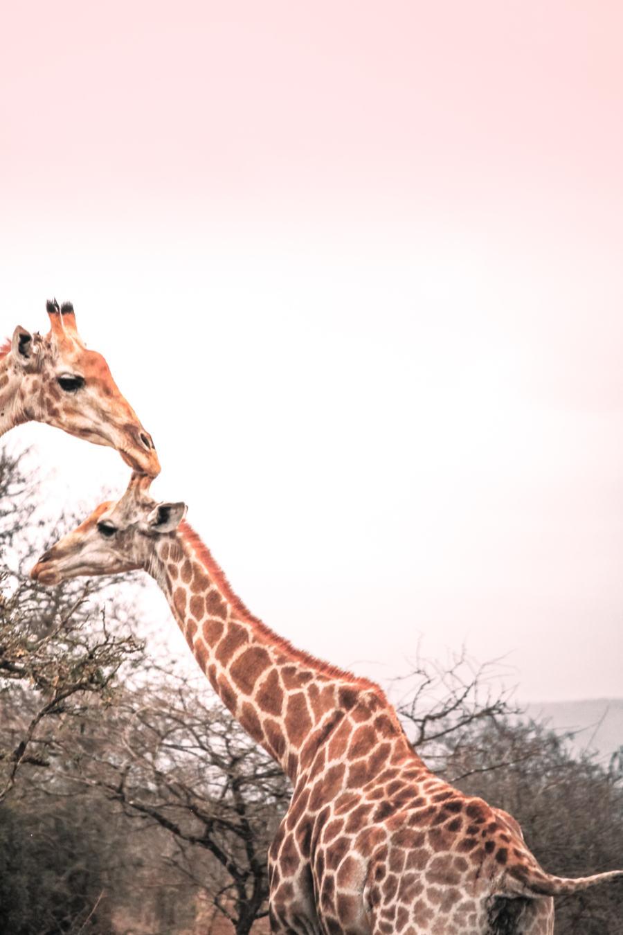 Thanda Safari Review-2