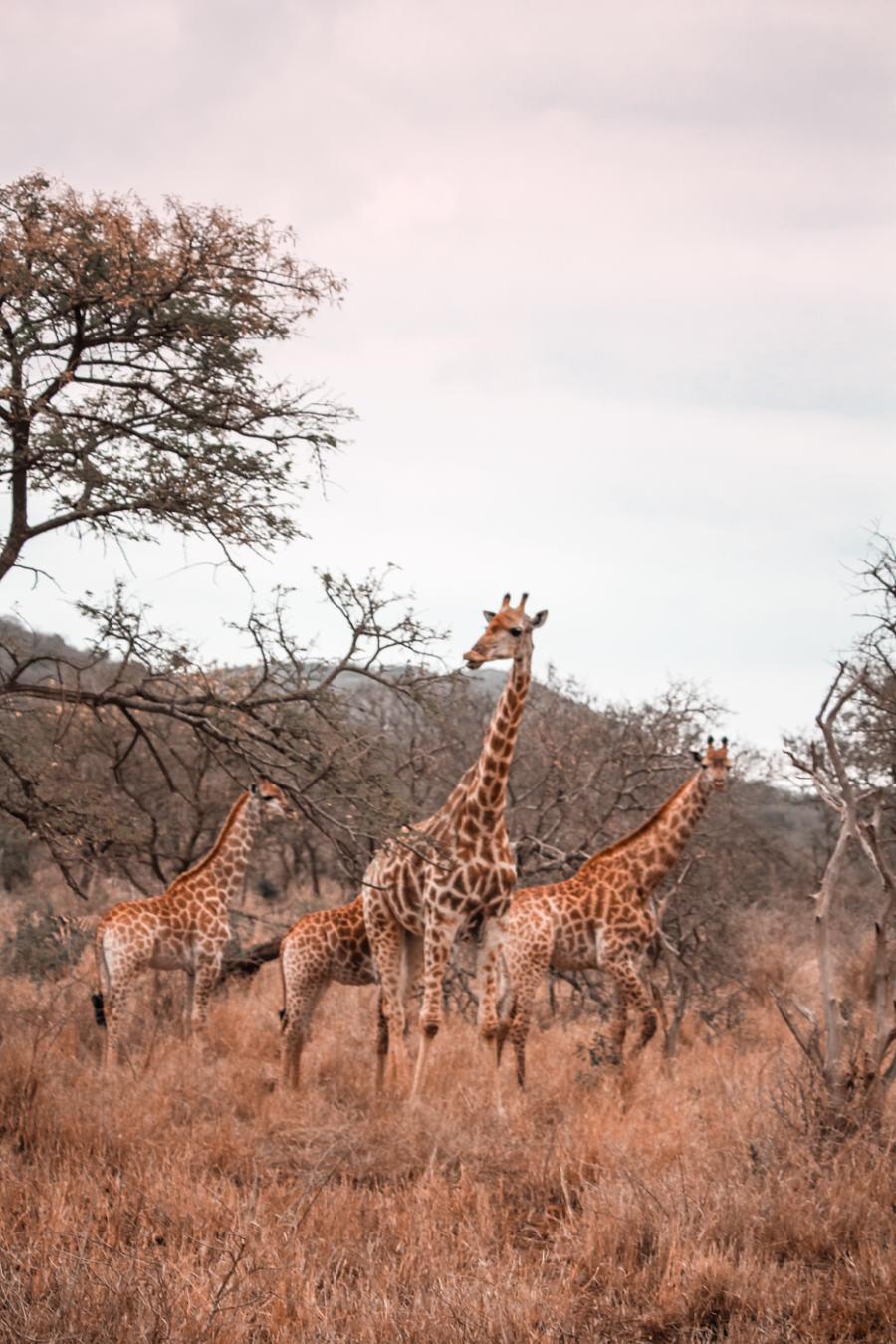 Thanda Safari Review--3