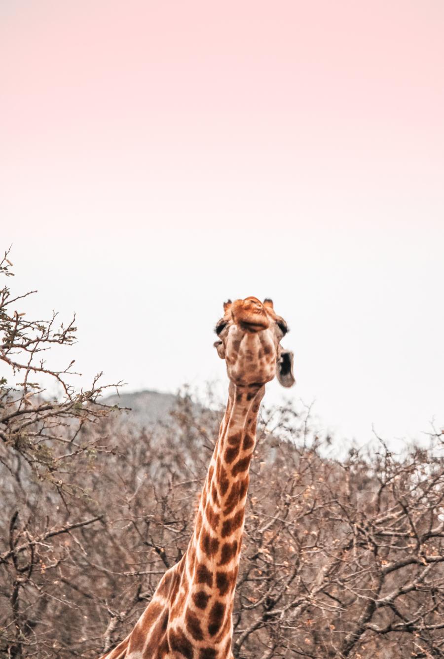 Thanda Safari Review--4