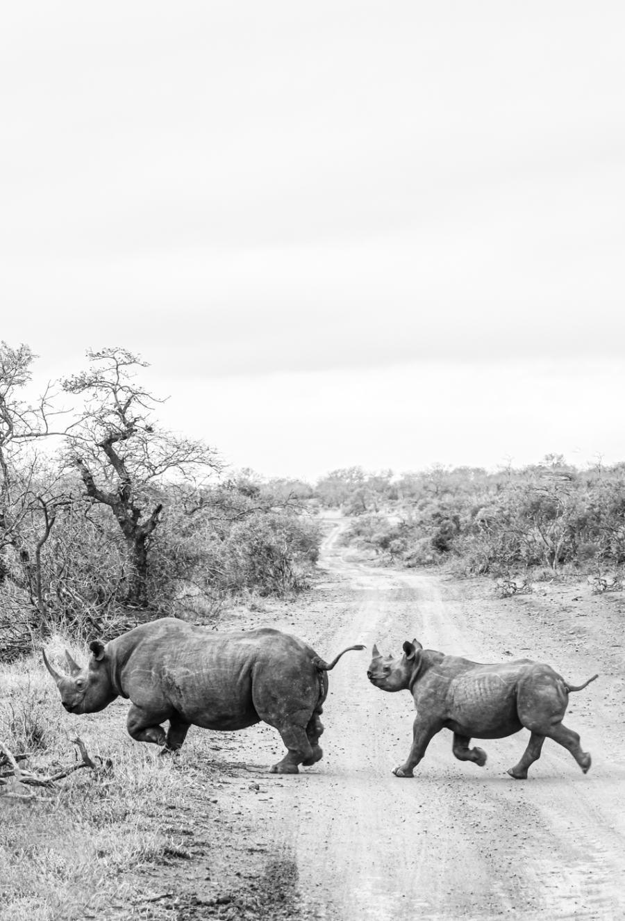 Thanda Safari Review--5