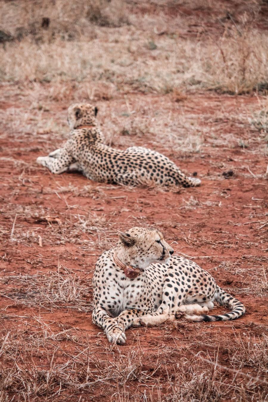 Thanda Safari Review-5742