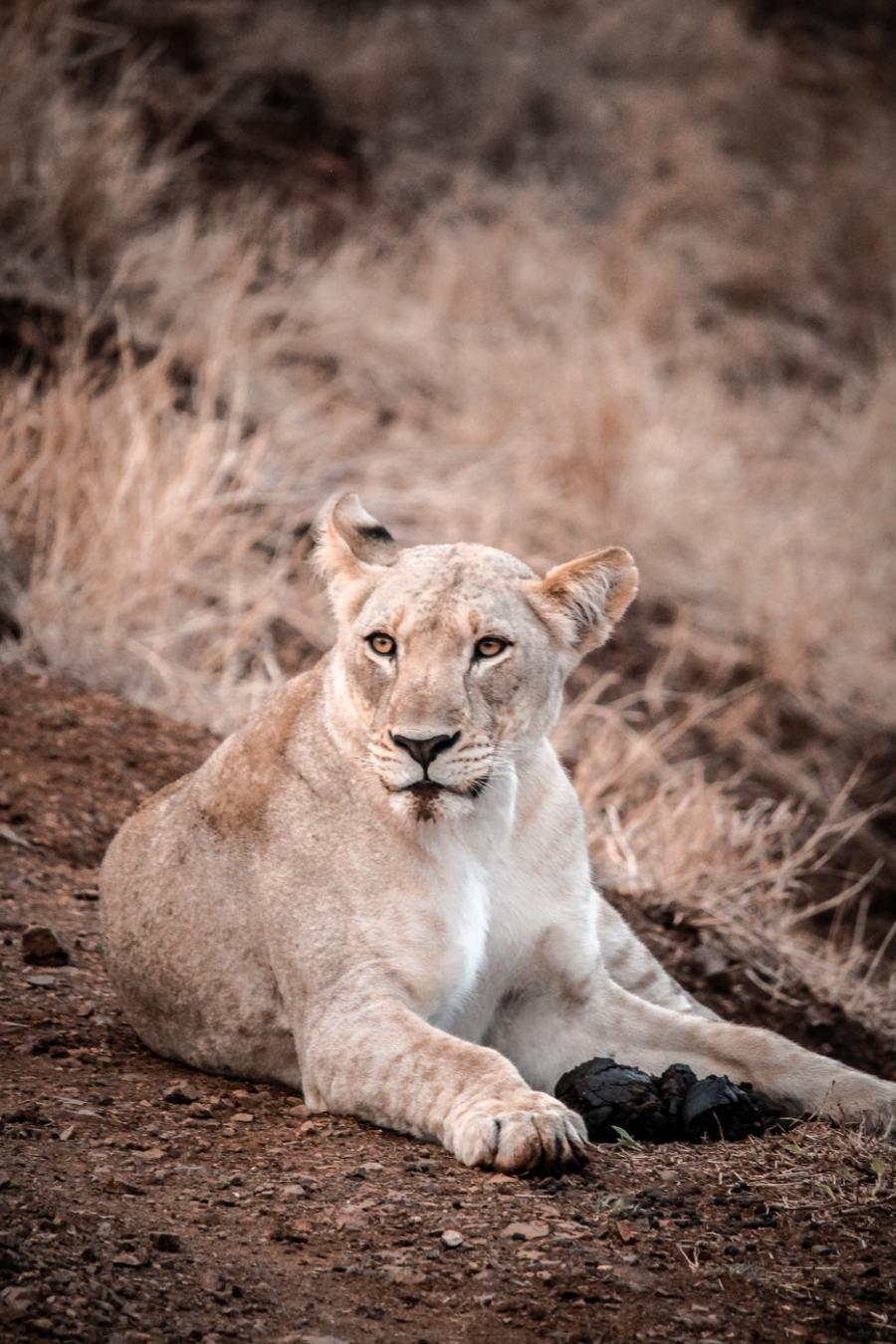 Thanda Safari Review-5760