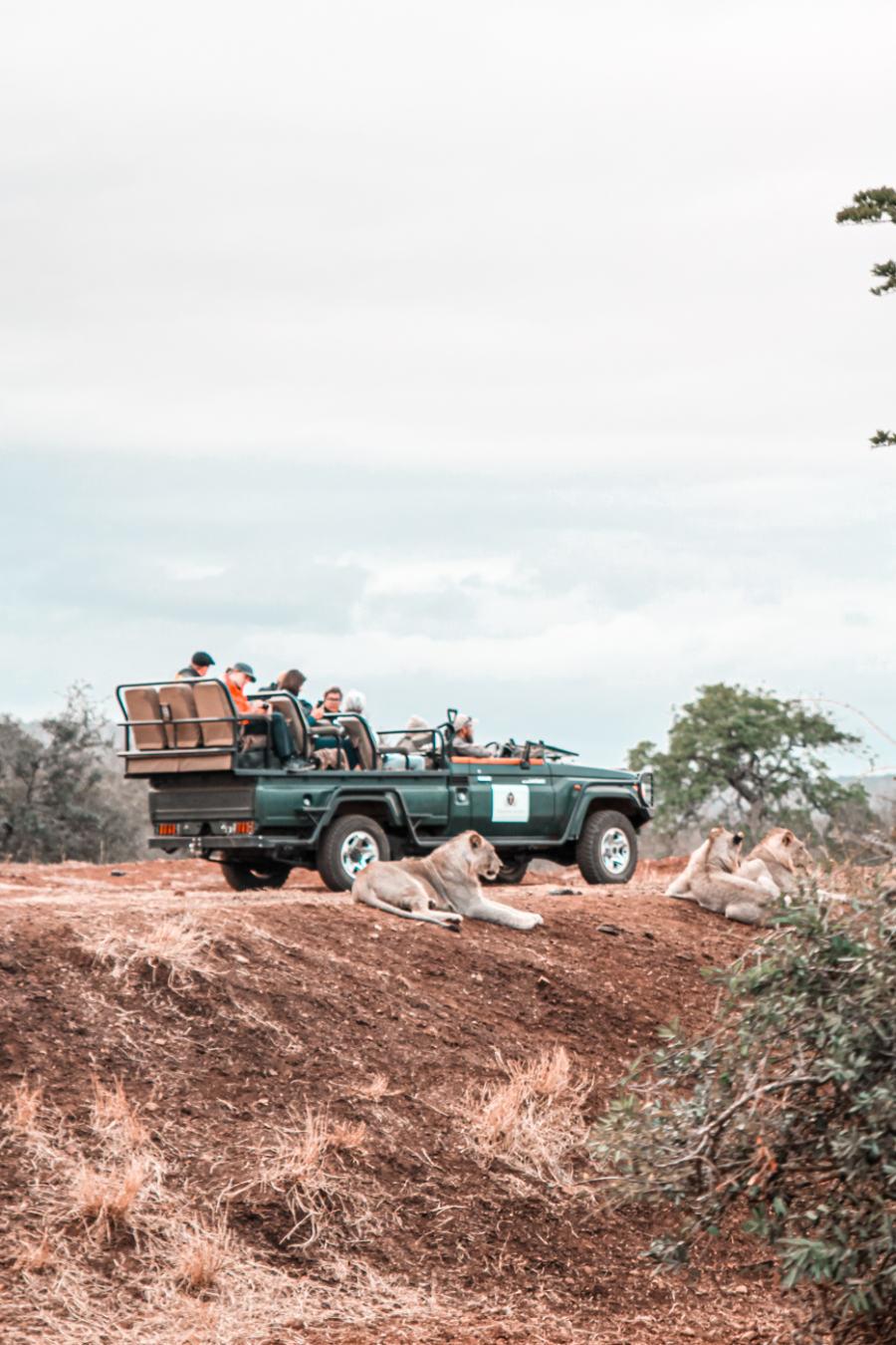 Thanda Safari Review-5775