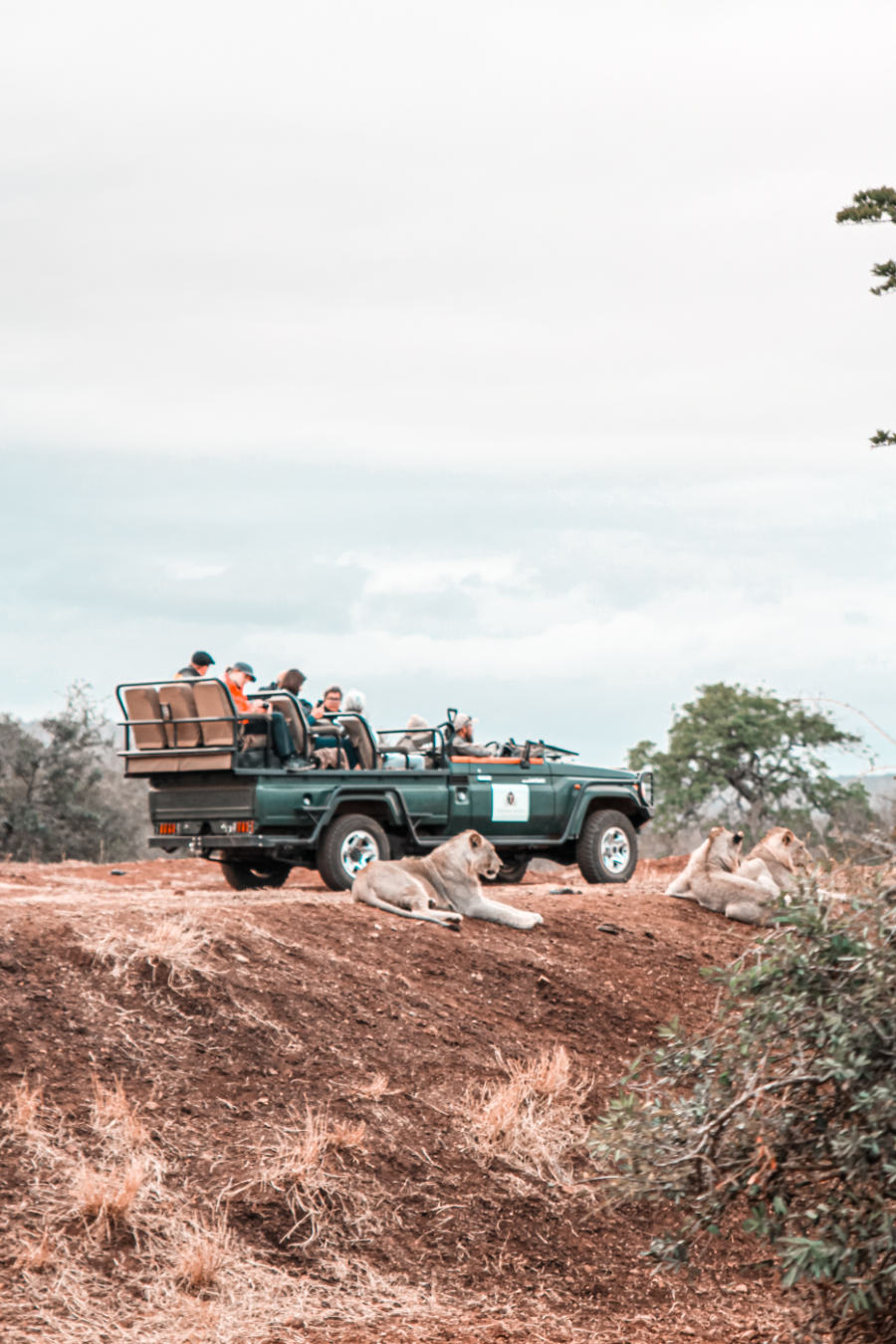 Thanda Safari Review-5775