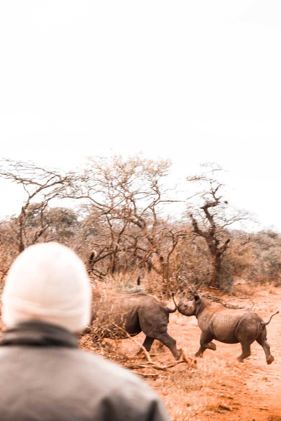Thanda Safari Review-5823