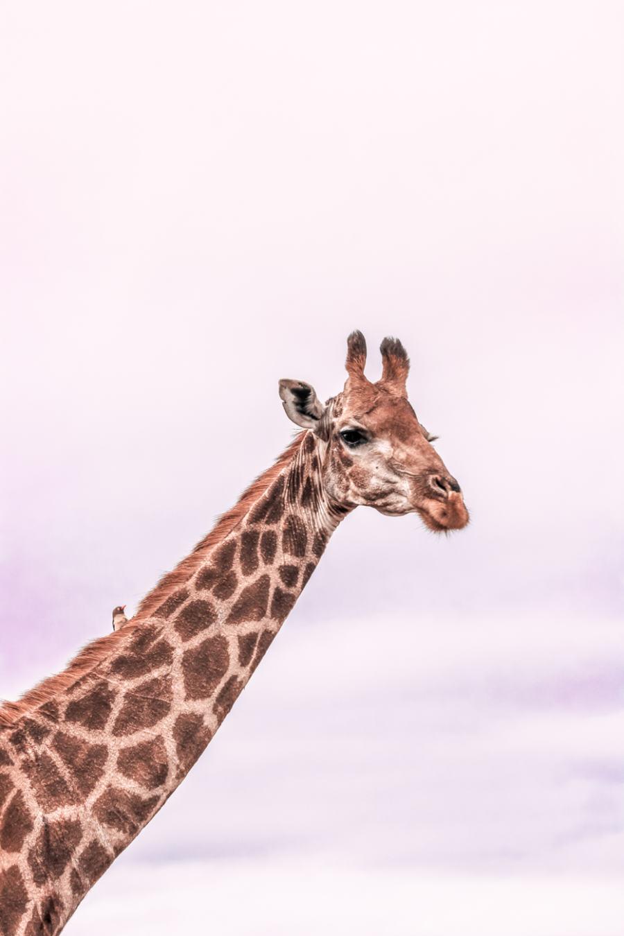 Thanda Safari Review--6