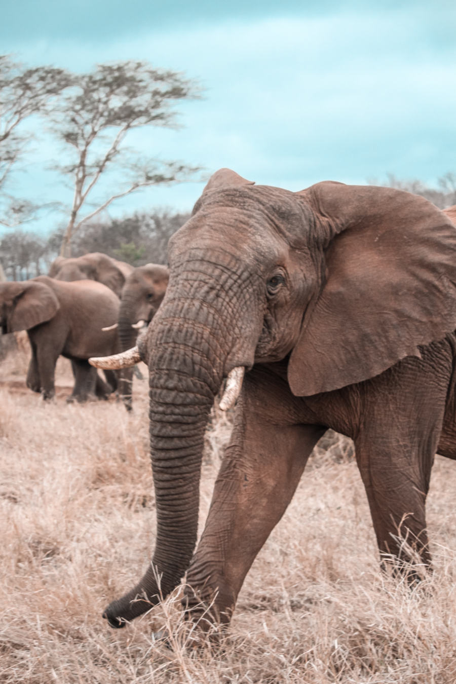 Thanda Safari Review-6135