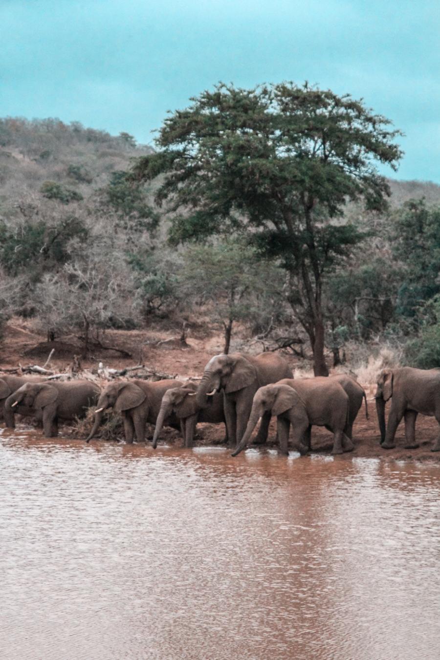 Thanda Safari Review-6203