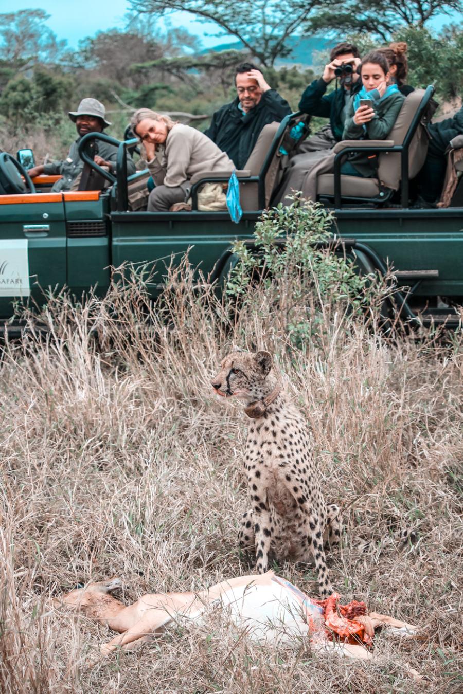 Thanda Safari Review-6308