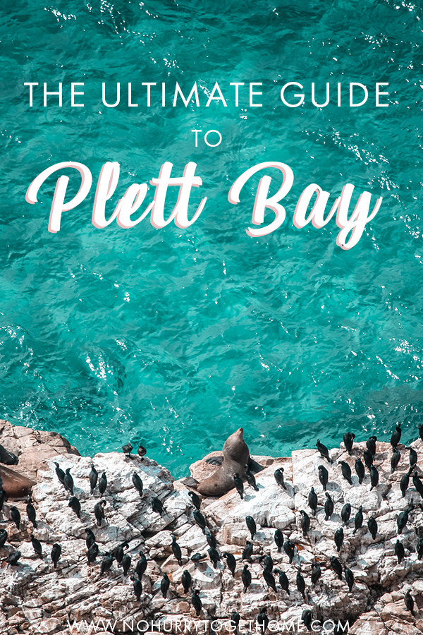 Visiting Plettenberg Bay in South Africa? Plett Bay is the gem of the Garden Route, and visiting this gem of a coastal town is a must on any South Africa itinerary. With so much to do there, pinpointing exactly what activities to part take isn't always easy, so I've rounded up a list of the absolute best things to do in Plettenberg Bay, as well as tips on where to stay, where to eat, and more! #PlettenbergBay #SouthAfrica
