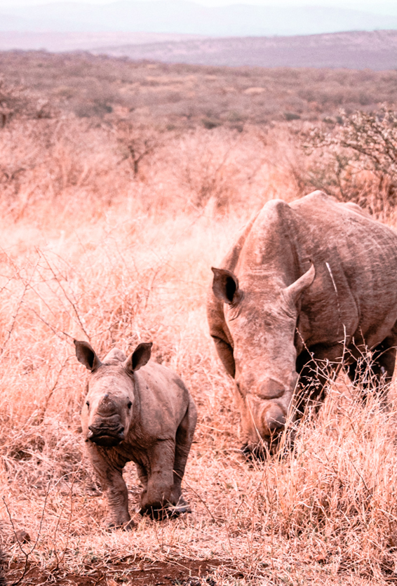Game Reserves in KZN South Africa - Rhino River Lodge Review - Game Drives 2