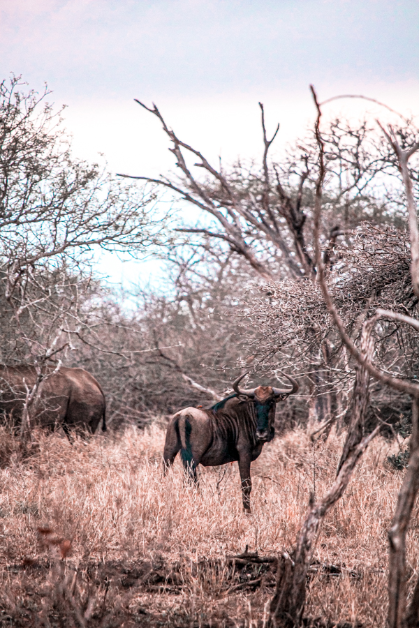 Game Reserves in KZN South Africa - Rhino River Lodge Review - Game Drives-26