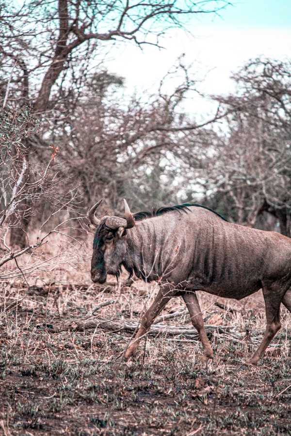 Game Reserves in KZN South Africa - Rhino River Lodge Review - Game Drives-27