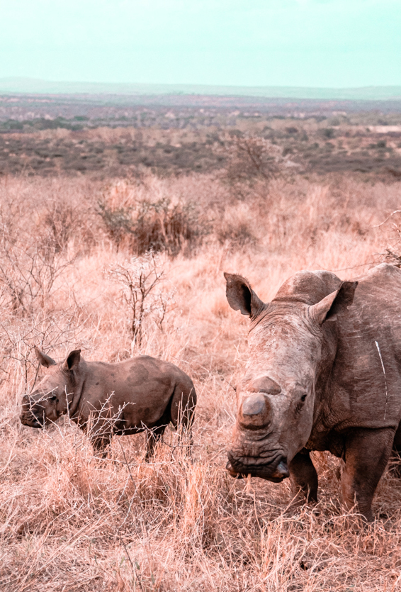 Game Reserves in KZN South Africa - Rhino River Lodge Review - Game Drives 3