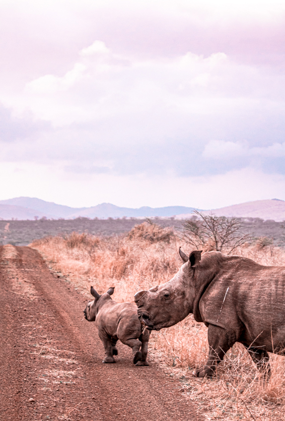Game Reserves in KZN South Africa - Rhino River Lodge Review - Game Drives 4