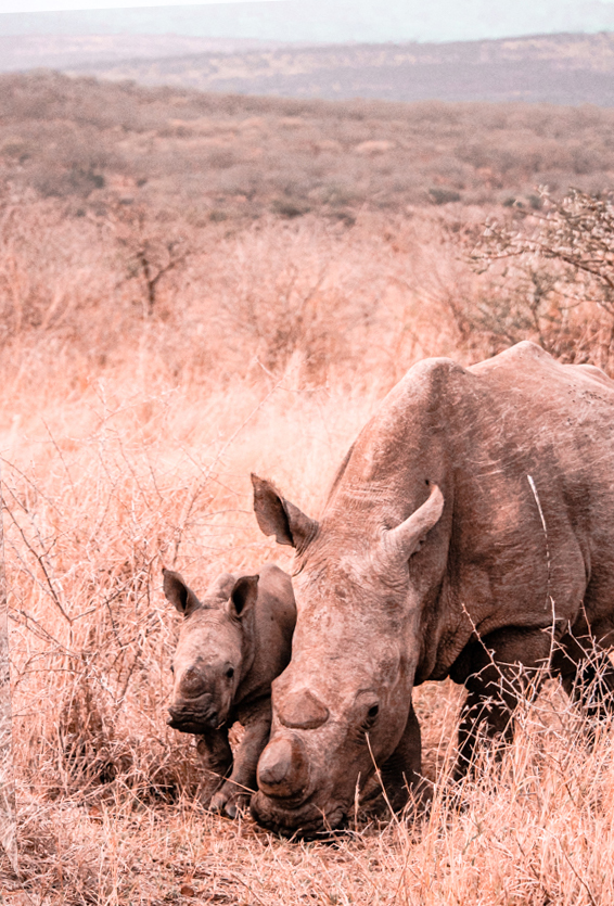 Game Reserves in KZN South Africa - Rhino River Lodge Review - Game Drives 6