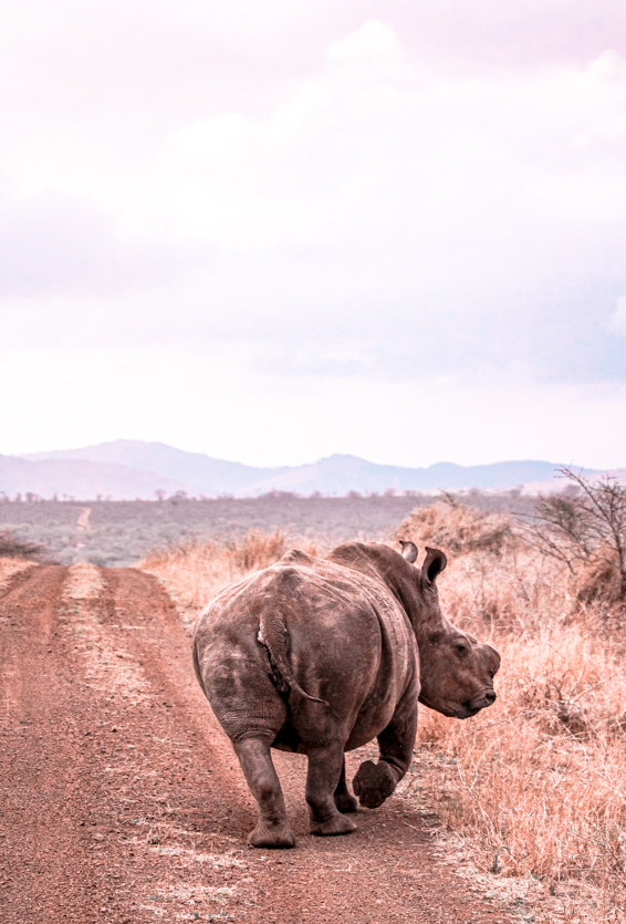 Game Reserves in KZN South Africa - Rhino River Lodge Review - Game Drives 9