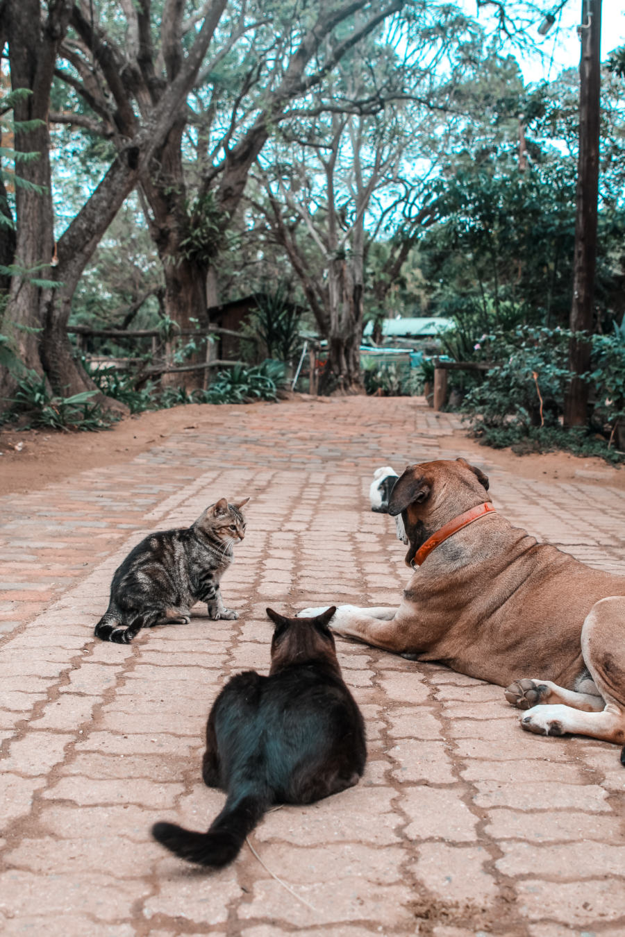 Rescued cats and dogs at Nyanza Farm