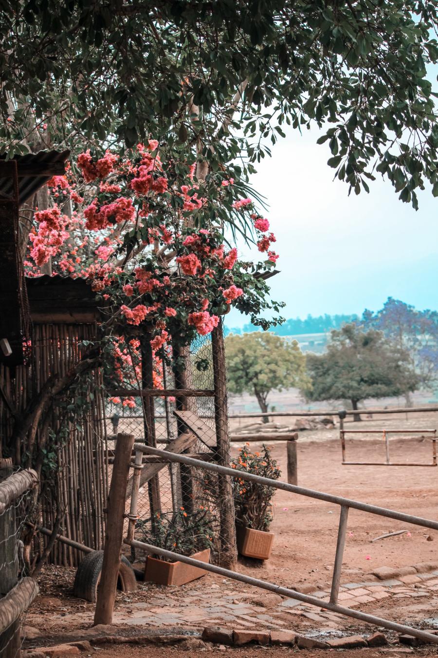 Nyanza Farm
