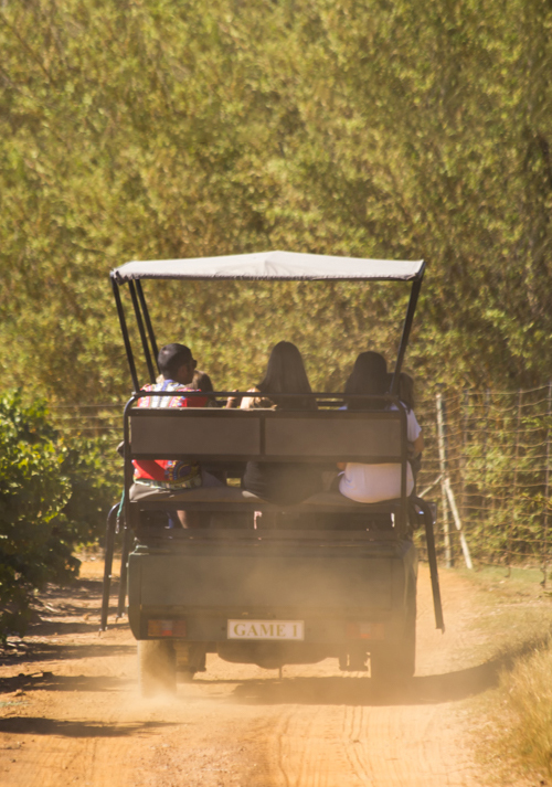 Stellenbosch Wine Farms - Villiera Game Drive