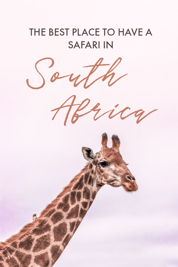 Planning a safari in South Africa but unsure what game reserve, safari lodge, or national park to stay in? If you're looking for a unique safari that will give you the chance to see some of the best animals and wildlife in South Africa, this is the absolute best safari lodge to stay at when you travel South Africa. #SouthAfrica #Safari #Africa