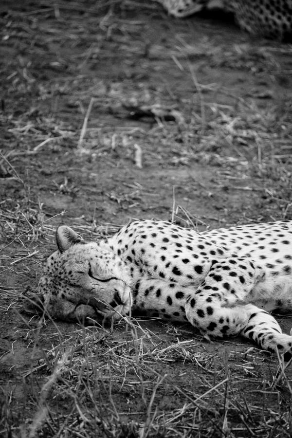 Thanda Game Reserve Getaway-14