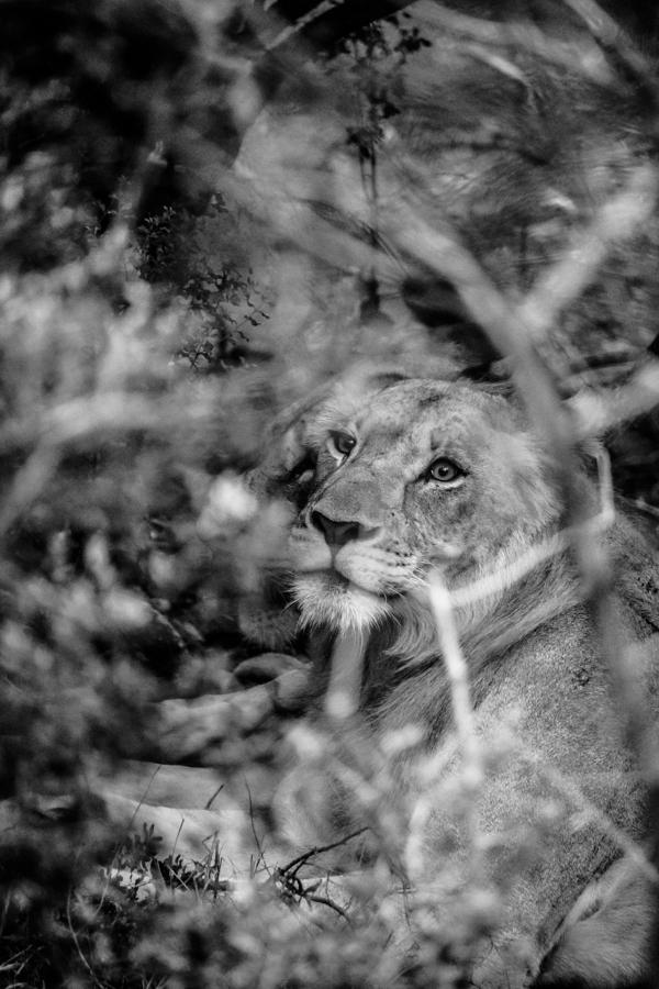 Thanda Game Reserve Getaway-17
