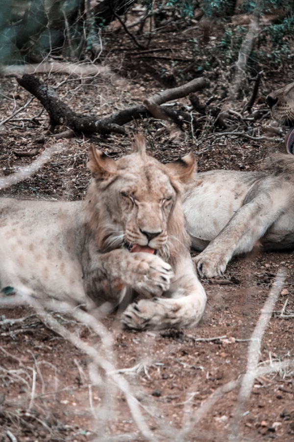 Thanda Game Reserve Getaway-18