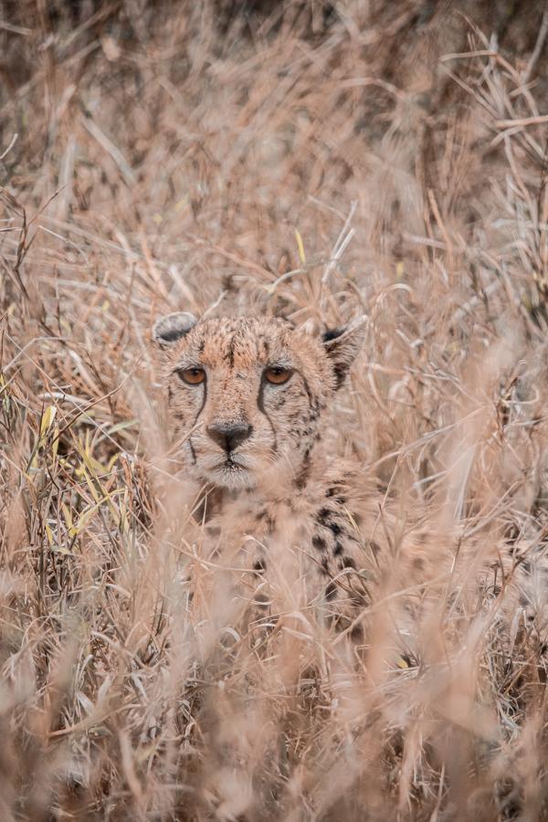 Thanda Game Reserve Getaway-26