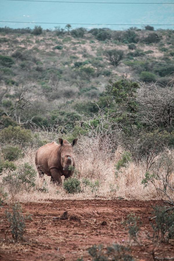 Thanda Game Reserve Getaway-31