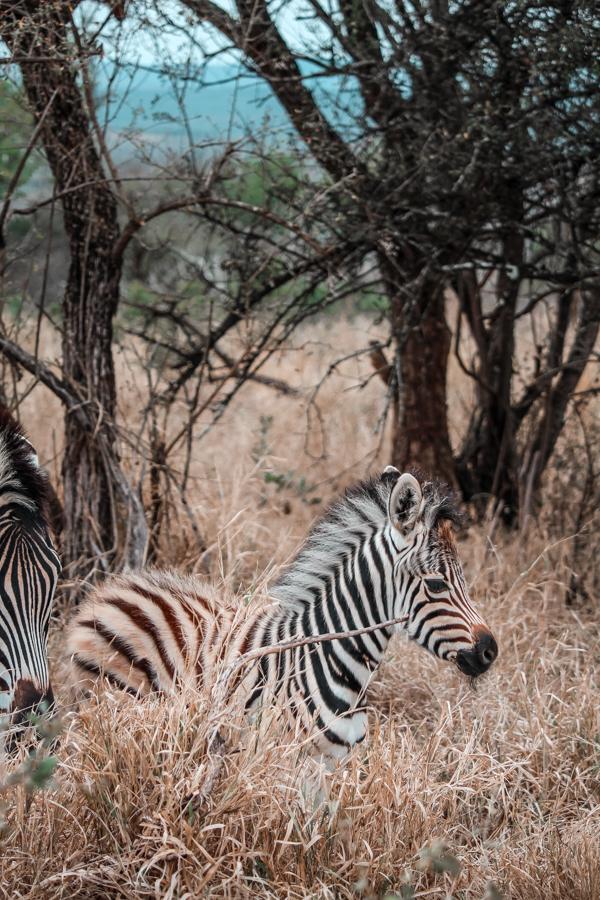 Thanda Game Reserve Getaway-4
