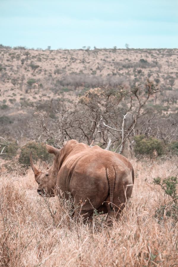 Thanda Game Reserve Getaway-5