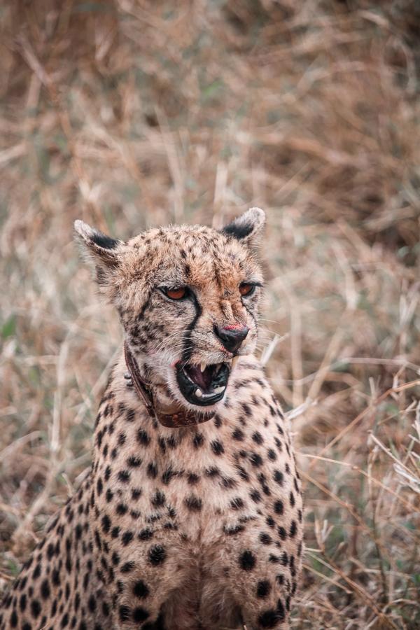 Thanda Game Reserve Getaway-6