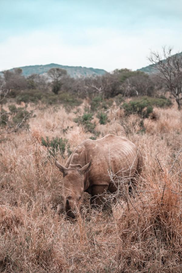 Thanda Game Reserve Getaway-7