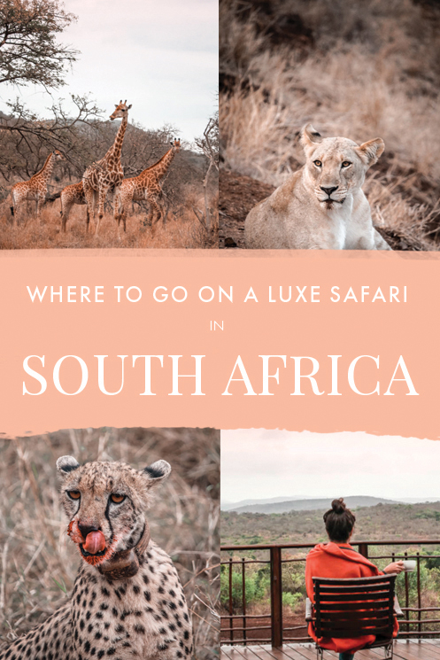 Wondering where to go on a luxury safari in South Africa? If you're looking for a luxury holiday and game drive where pampering is guaranteed, you'll love staying at this lodge in the heart of Zululand and just a short drive away from Durban! #Thanda #Safari #SouthAfrica #Africa